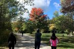 Fall walk in the park