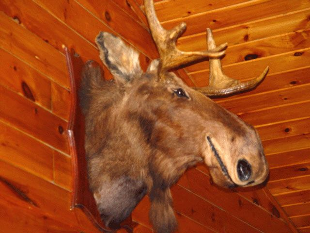 5-25_famous_smilin_moose 368.jpg